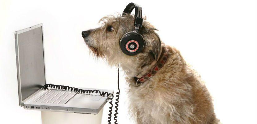 RadioCan, la primera radio dedicada a los perros - http://www.mundoperros.es/radiocan-la-primera-radio-dedicada-los-perros/