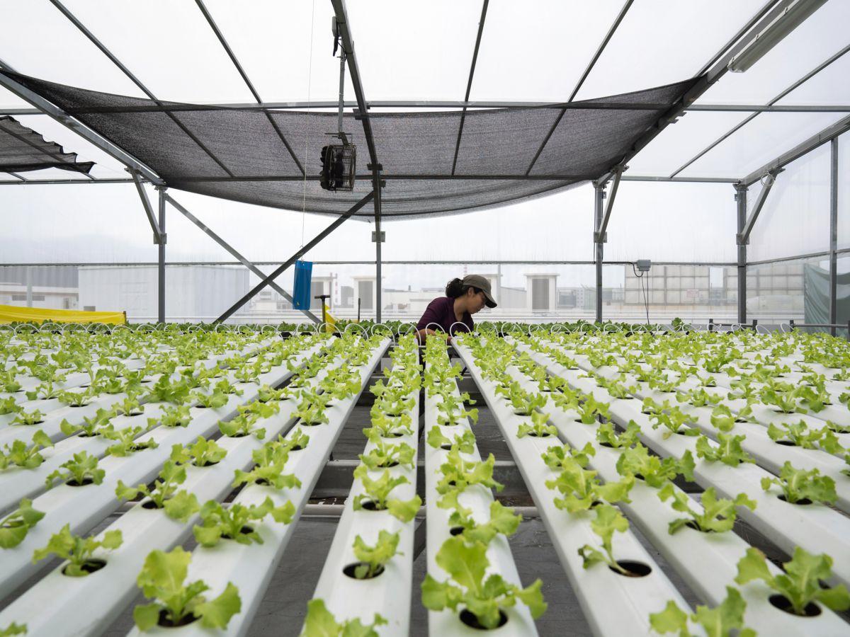 Jeunes Pousses Sur Gratte Ciels L Agriculture Sur Les Toits De Singapour Decolle Singapour Gratte Ciels Agriculture