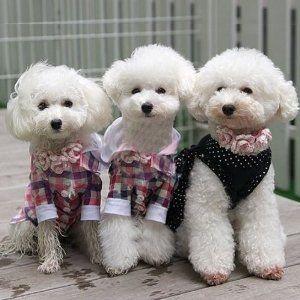 Look At A Japanese Pet Fashion Store In Harajuku Tokyo Fashion