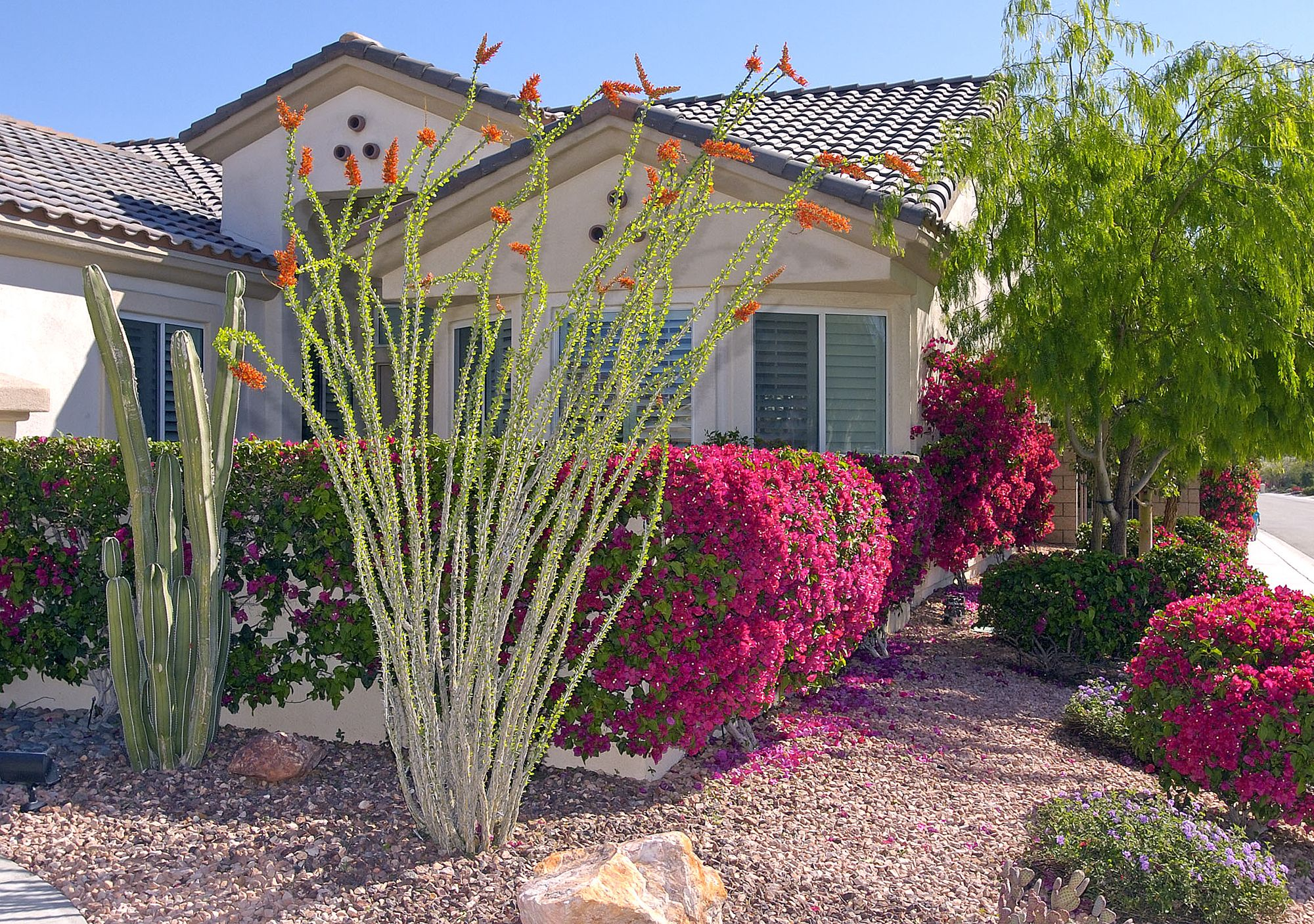 southwest desert landscaping ideas front yard