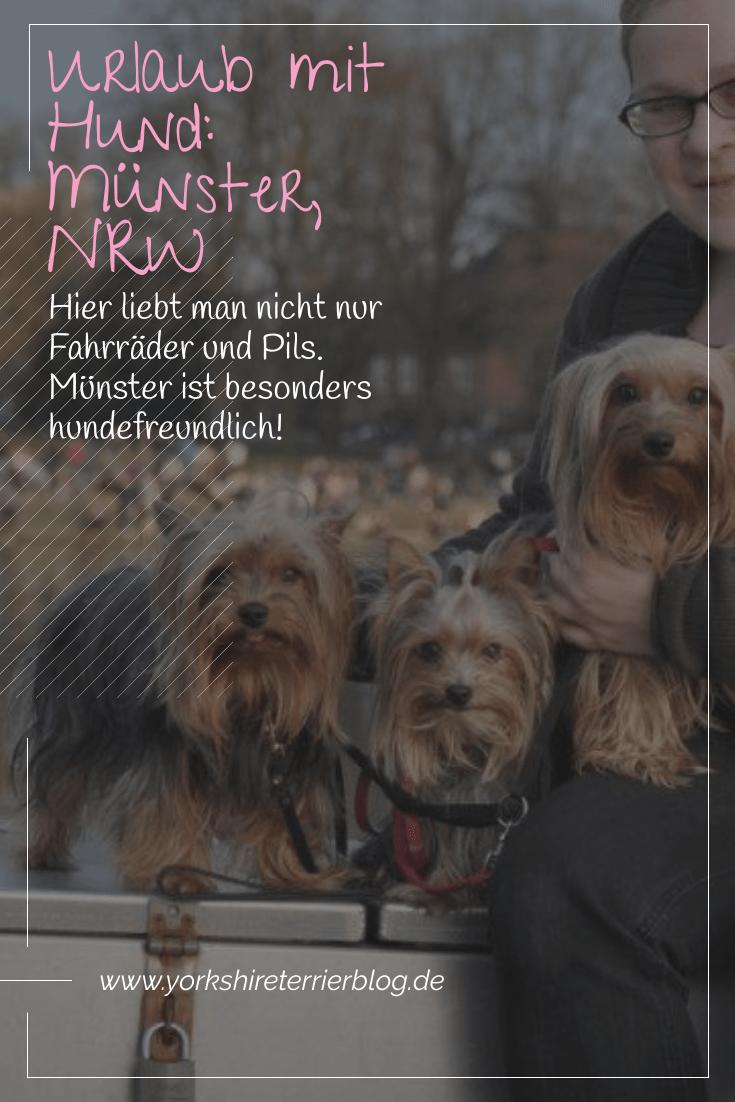 Kennt Ihr Eigentlich Unsere Wunderschone Heimatstadt Munster Nein Dann Wird Es Aber Zeit Denn Munster Ist Besonders Hundefreund Urlaub Mit Hund Hunde Yorkie