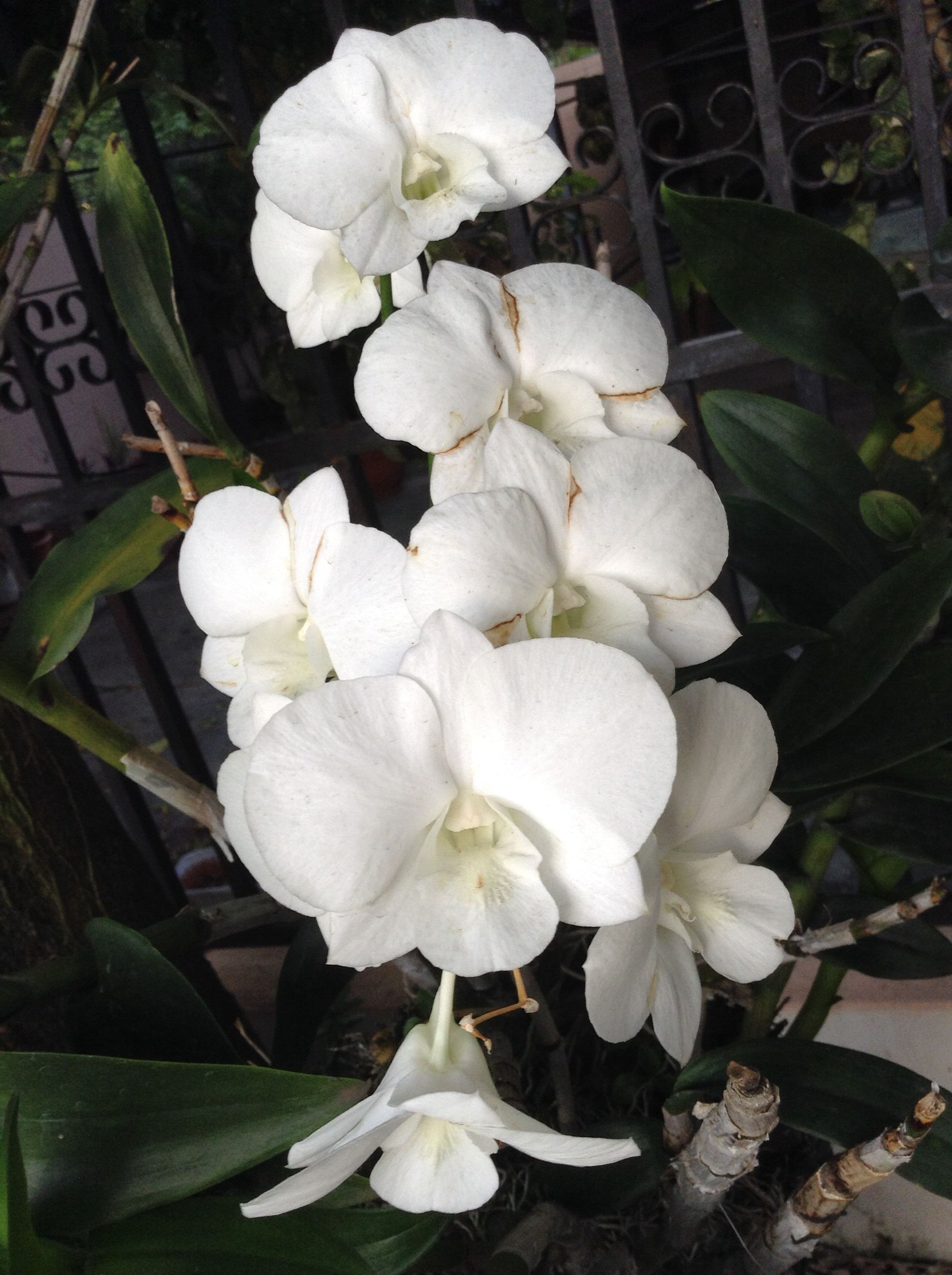 Orquideas orquideas de mi jardín pinterest flowers and plants
