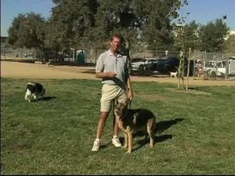 Basic Dog Training Tips How To Train A Dog To Come Basic Dog