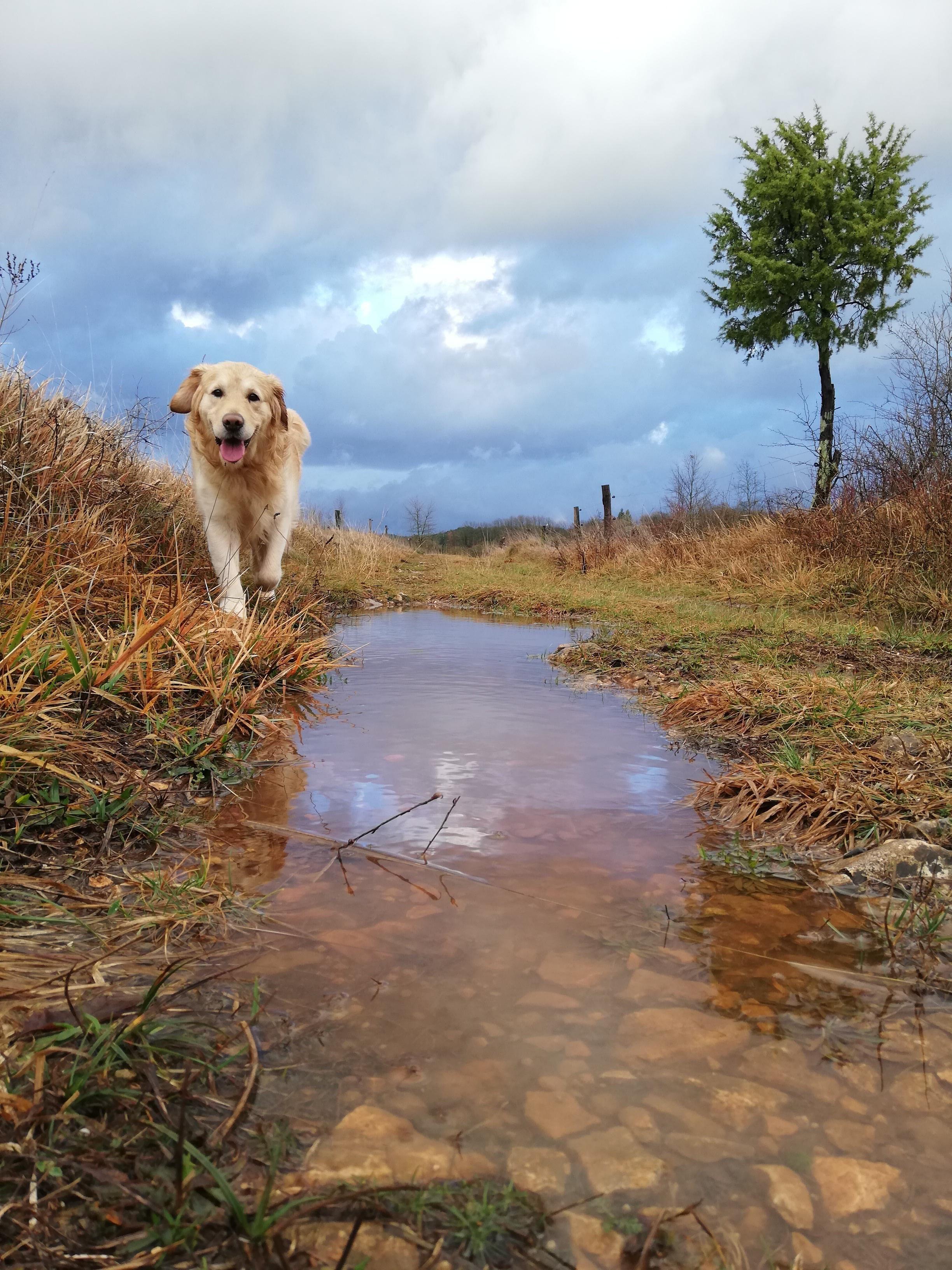Happy Doggo Goldenretrievers Dogs Golden Retriever Golden
