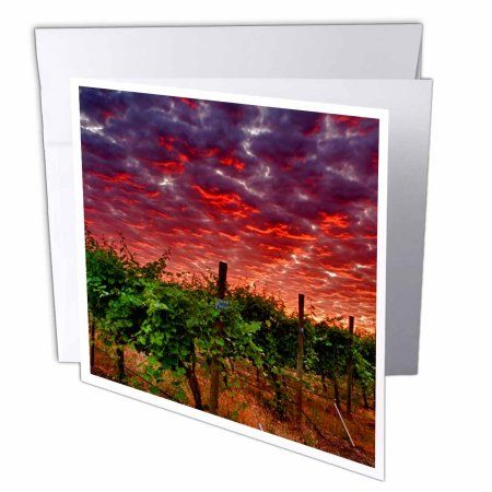 3dRose USA, Washington, Walla Walla wine country vineyard - US48