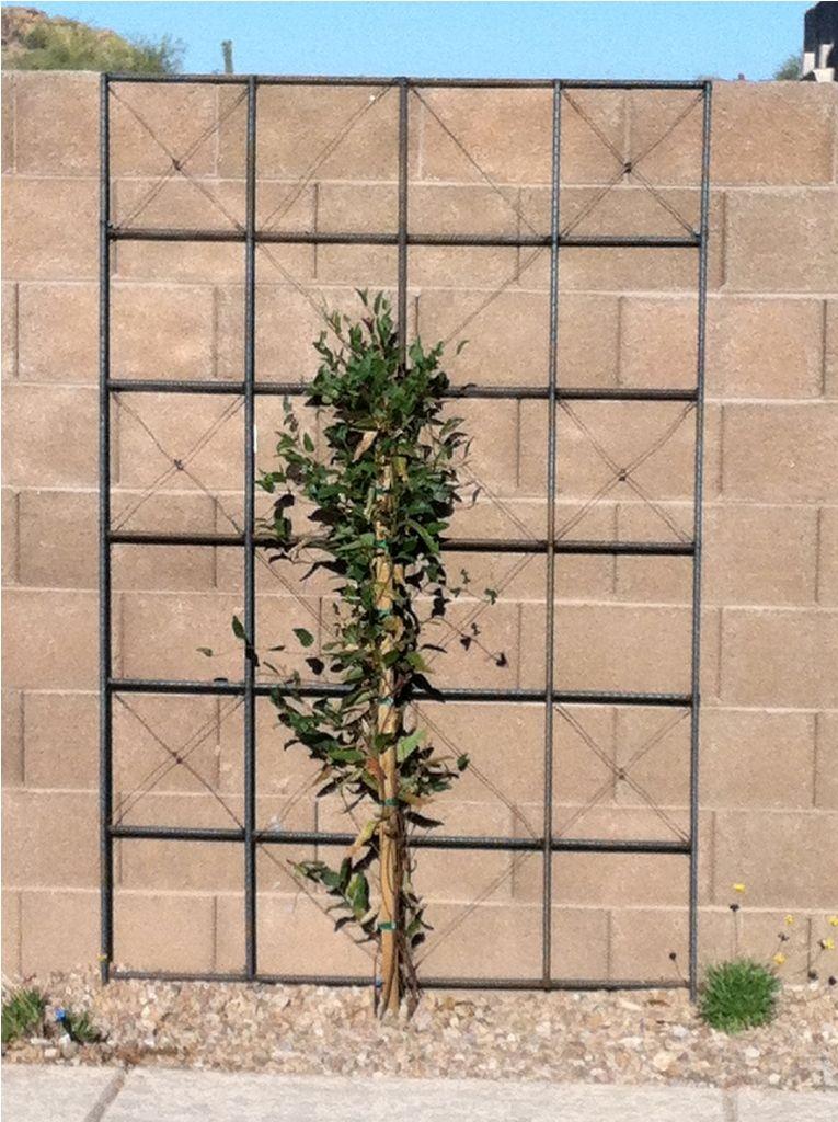 Exterior: Stylish Decor Arbor Metal Trellis And Climbing ...