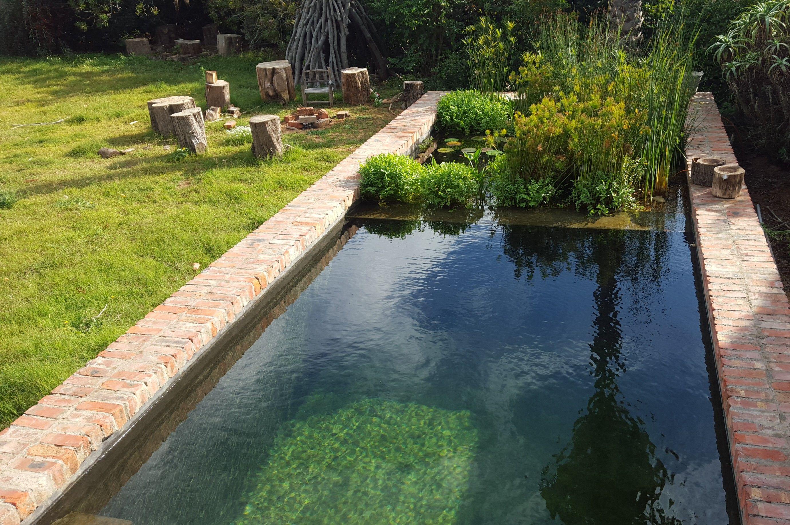 Constantia new pool wetland pools pool natural pool