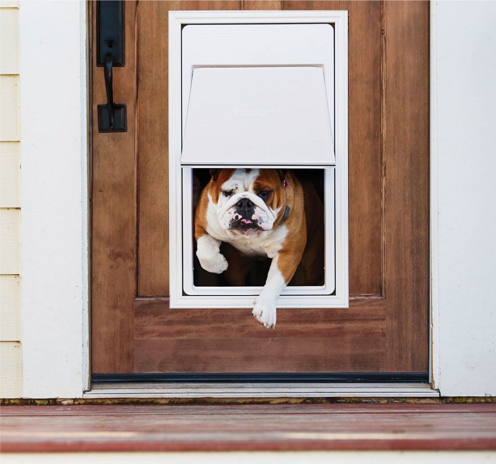 Best Electronic Dog Doors February 2020 Buyer S Guide And