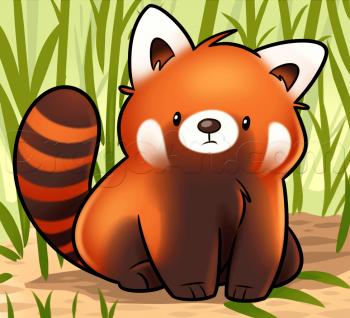 How To Draw A Red Panda Drawing Stuff In 2019 Panda Drawing