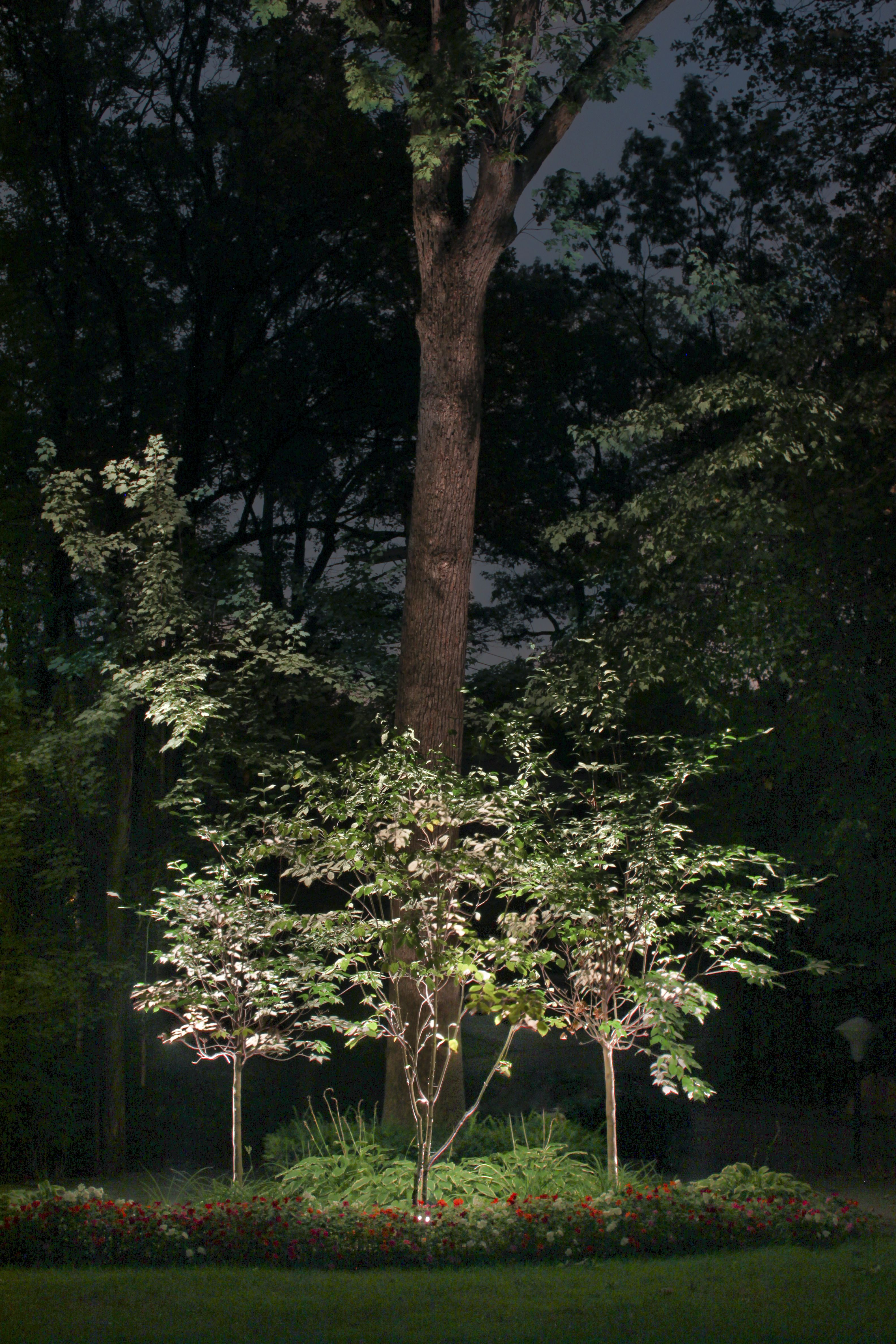 illuminated tree u0027s in a clients backyard creates a whimsical