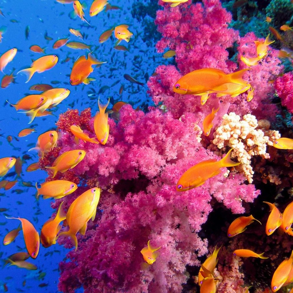 Colorful Coral Reef Wallpaper For Windows #bis