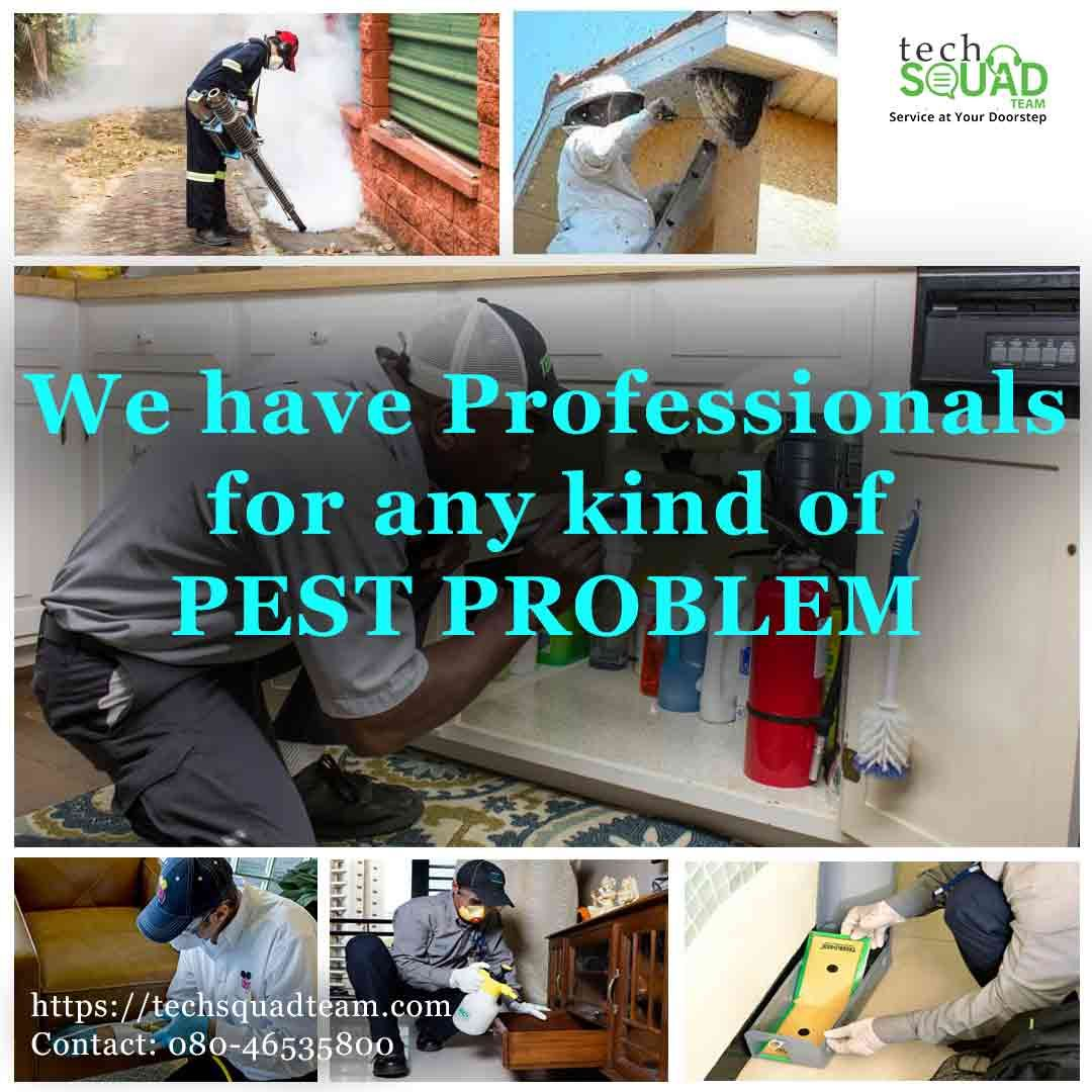 Pest Control Service For Home Kitchen And Hotels Pest Control Services Pest Control Pests