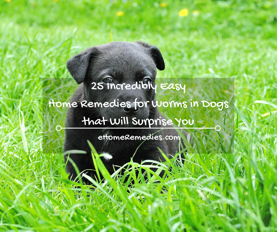 25 Incredibly Easy Home Remedies For Worms In Dogs Interesting