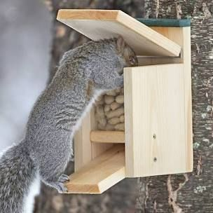 How to Make a Squirrel Feeder