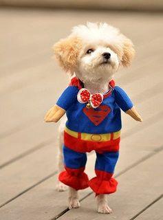 Delicol Cute Superman Pet Costume Superhero Dog Cat Cute Animals