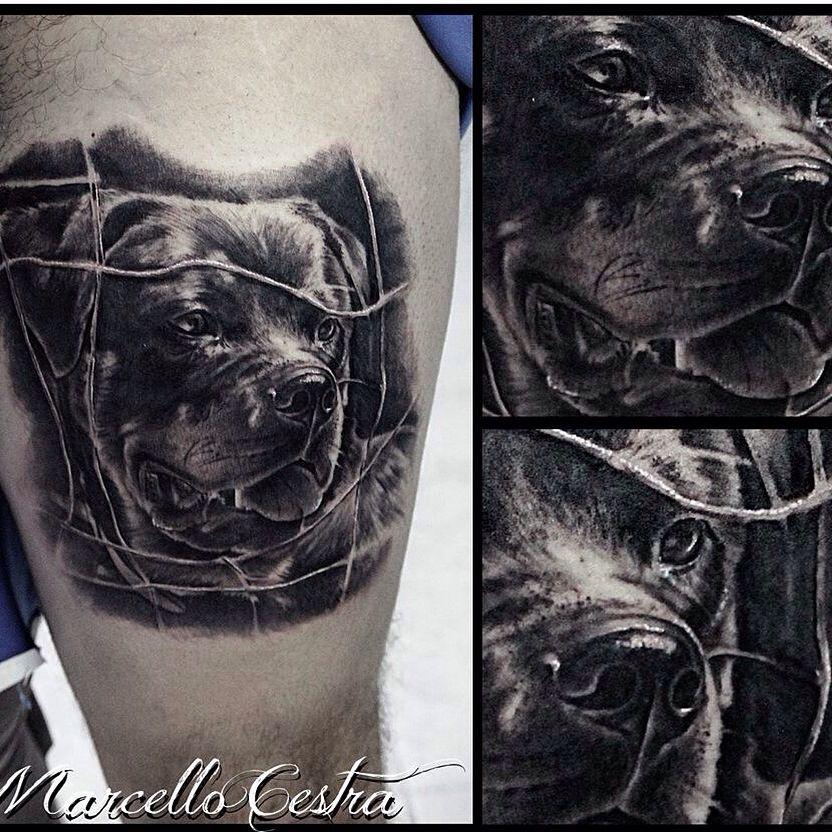 Tattoo Portrait Rottweiller...by Marcello Cestra