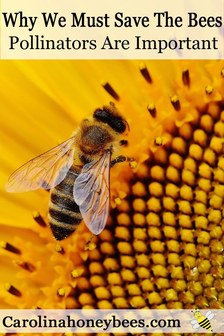 Why Should We Save Bees - What You Can Do