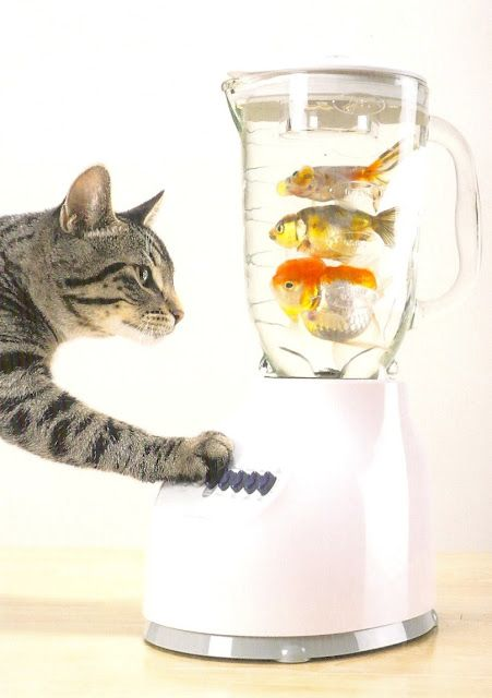 fish smoothie?