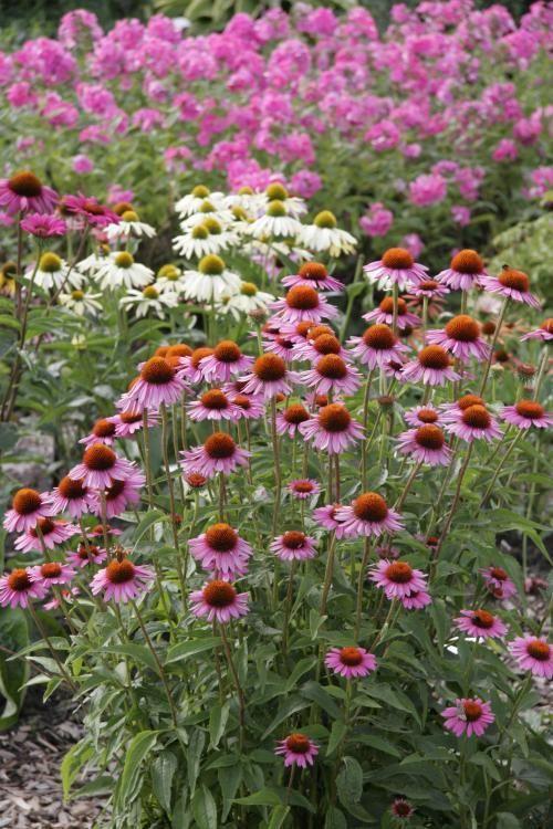 Charmant Während Die Natur Ihre Schönheit Selbst Bestimmt, Benötigt Der Garten Von  Zeit Zu Zeit Etwas
