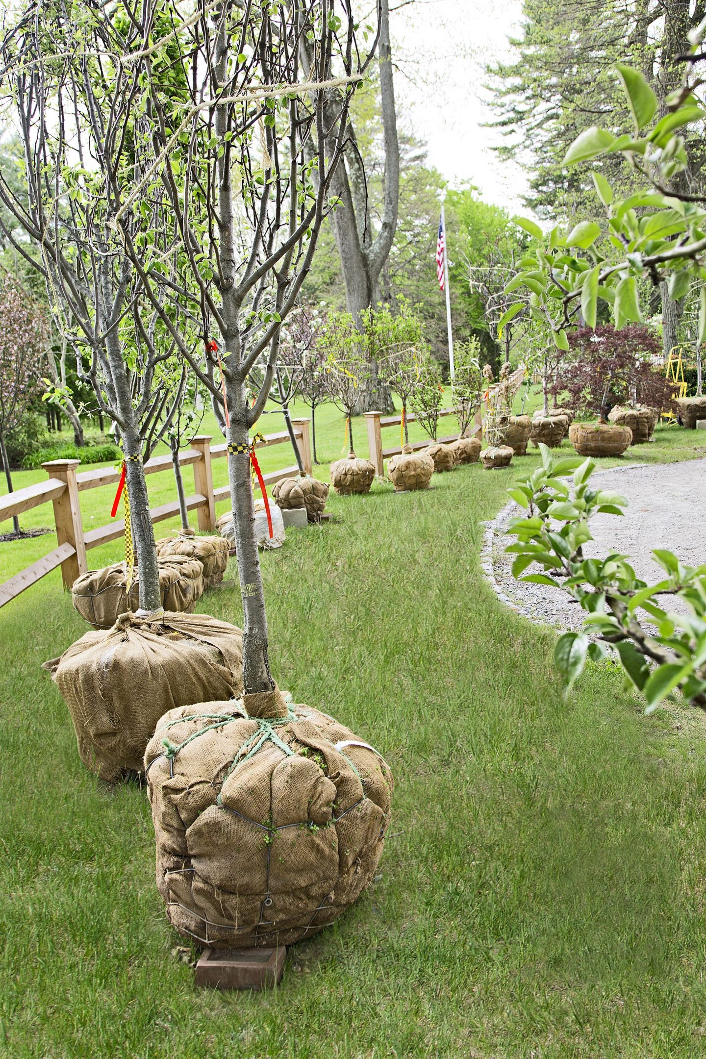 planting an orchard out back fruit trees silhouettes and gardens