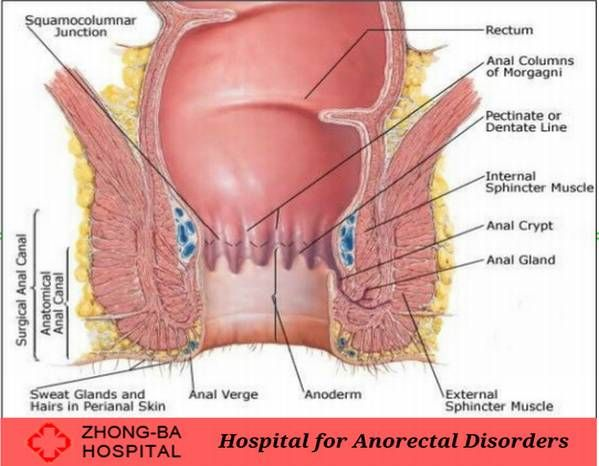 Anorectal Disorder and its Treatment | Pinterest