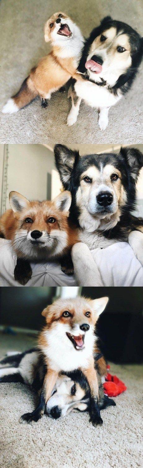 Fox and hound BFFs!