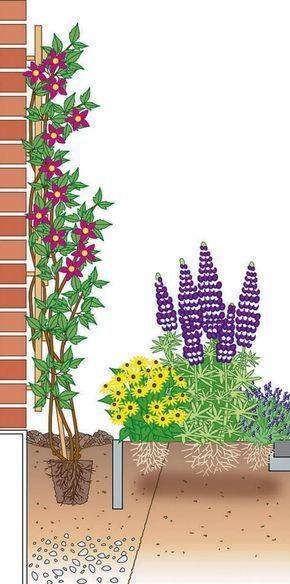 Clematis richtig pflanzen | Pinterest | Zeichnungen, Gärten und Pflanzen