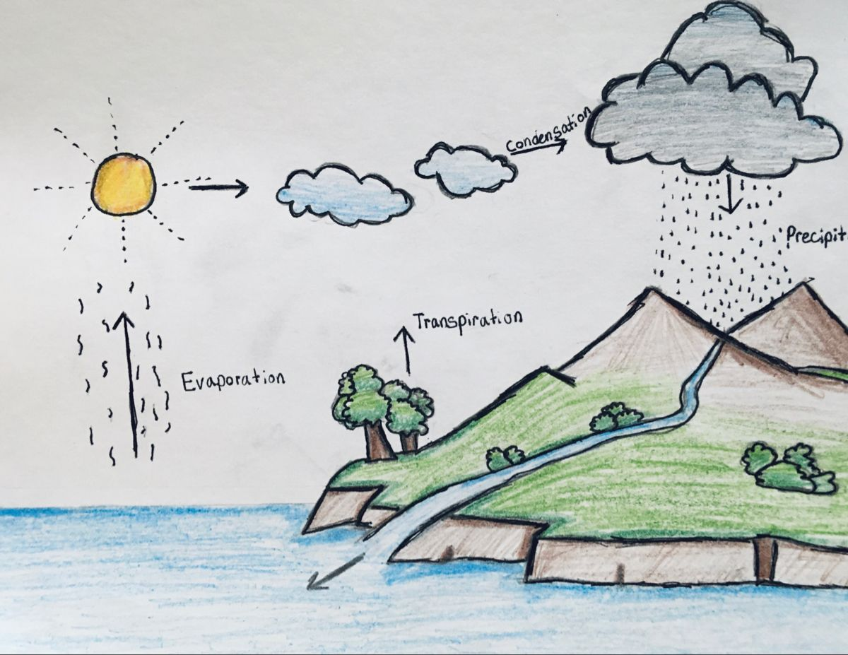 The Water Cycle Water Drawing Water Cycle For Kids Water Cycle Drawing For Kids