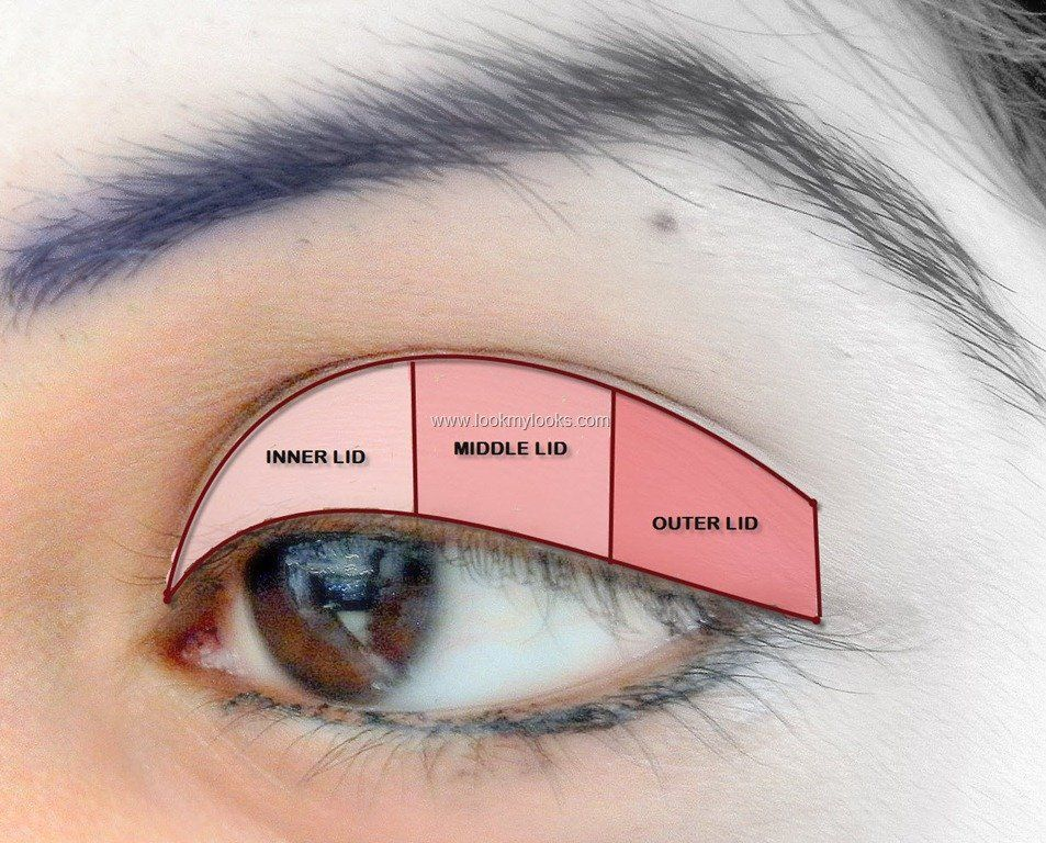 And sometimes the eyelids are also divided into three areas for and sometimes the eyelids are also divided into three areas for some makeup applications ccuart Gallery