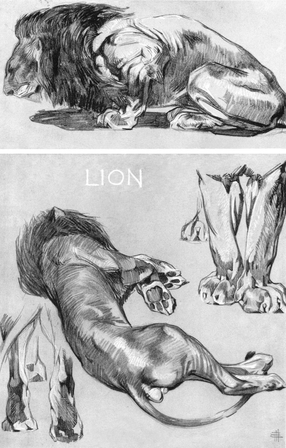 Deja View Mathurin Mheut Art Pinterest Animal Lions And Draw
