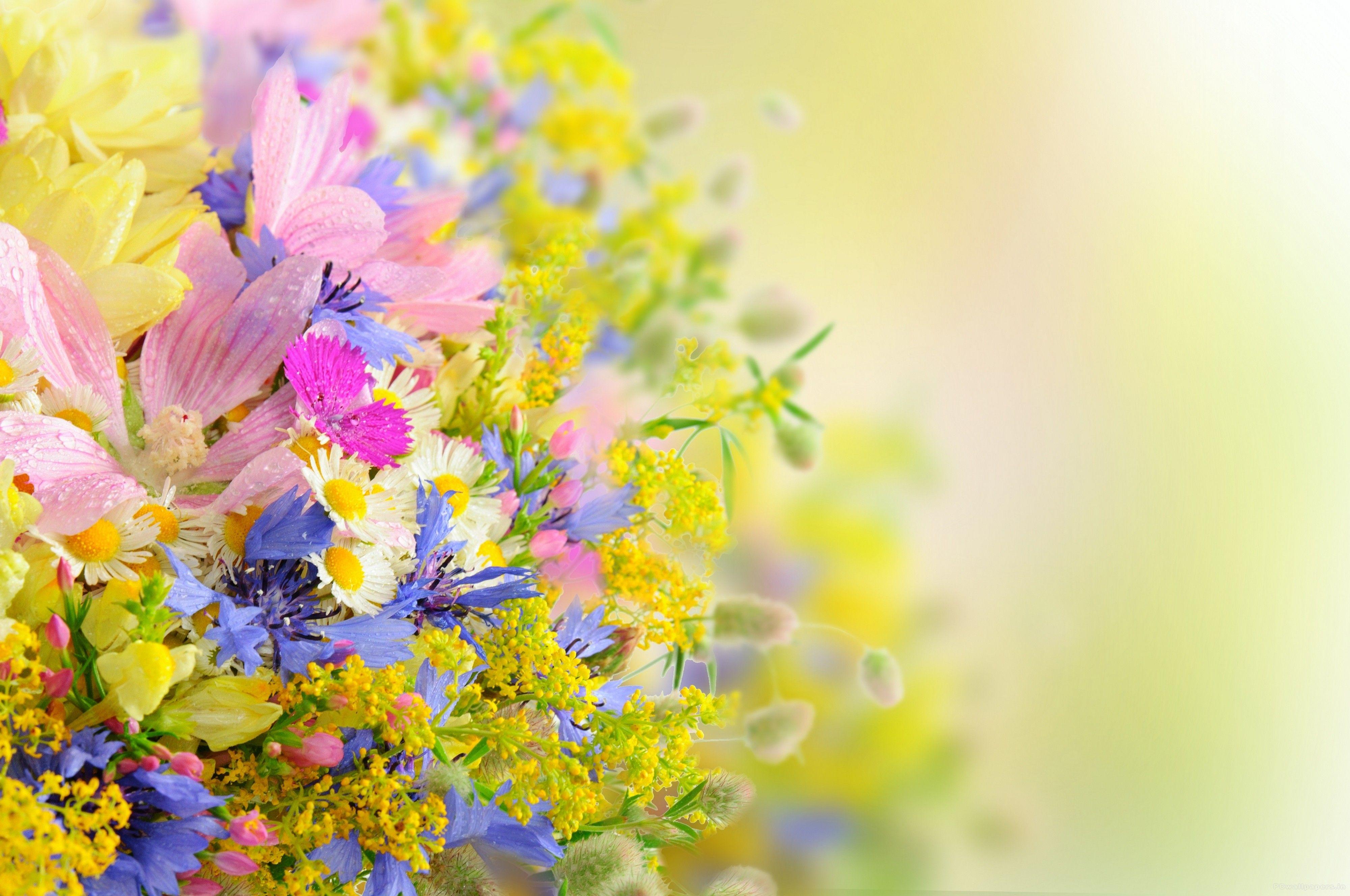 Flower Wallpaper Full Hd For Desktop Wallpaper 4000 x 2657 px 3.12 MB beautiful red blue ...