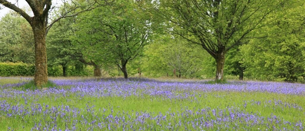 Arran in Focus on Flower photos, Scotland castles
