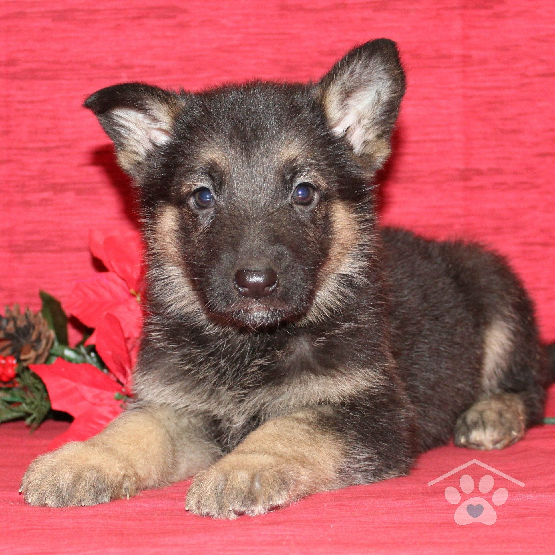 Hi, my name is Axel and I am a stunning male German
