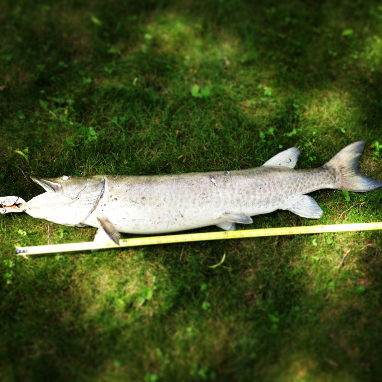 47 Muskie Lake Cabin Life Fish