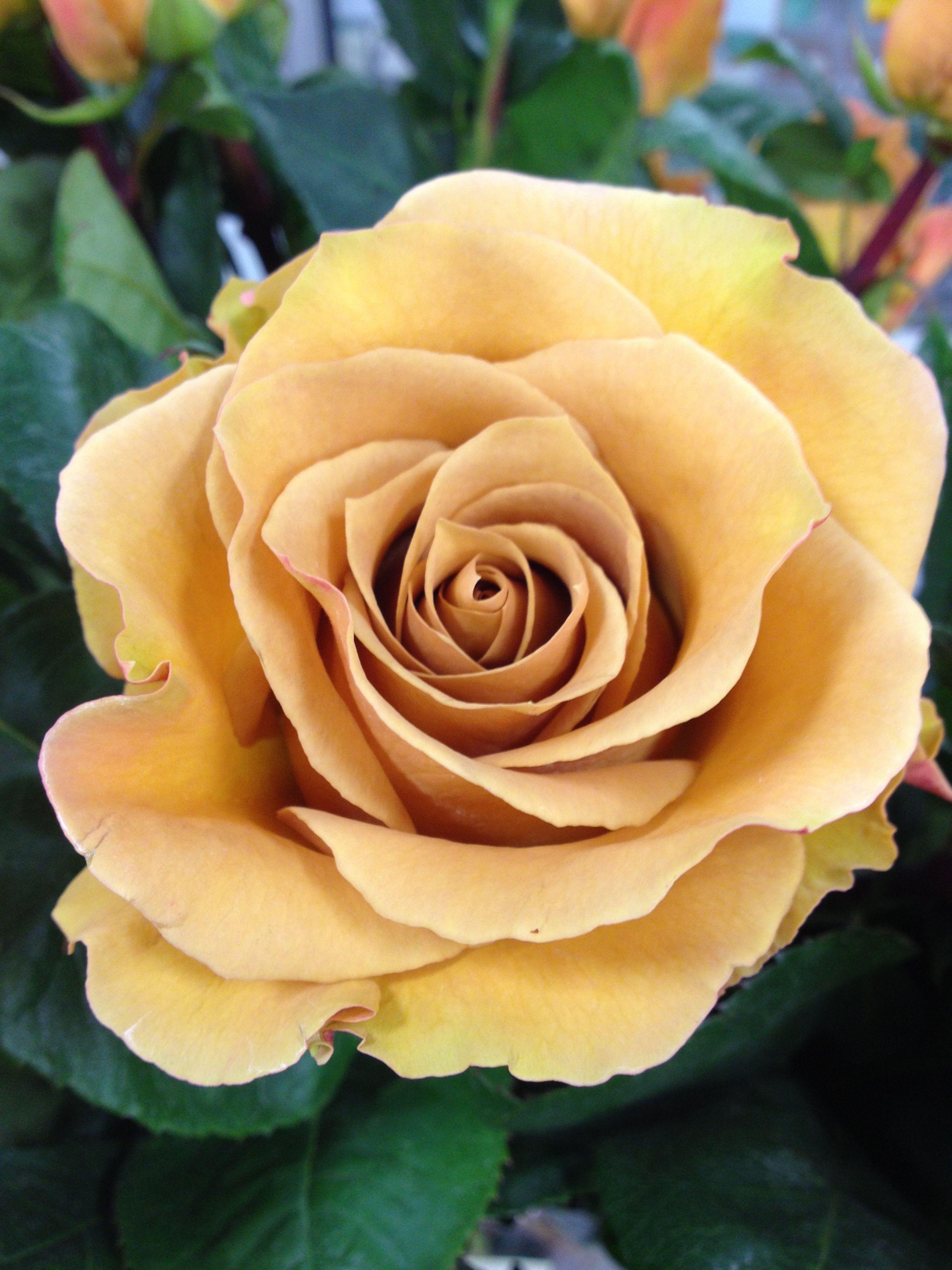 Rose \