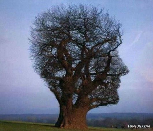 Most Unusual Tree Ever