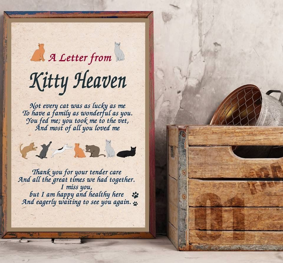 A letter from kitty heaven    Felinity   Letter from heaven