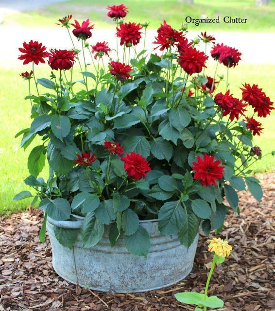 Transferable Container House: Container Gardening Ideas For The Many Different Garden