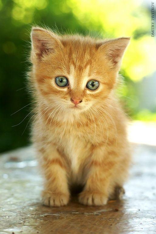 Cute Kitten By Dmitry Tsvetkov 500px Kittens Cutest Cute Baby