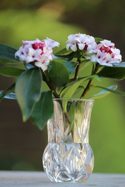 44 Inspiring Fragrant Indoor Plants Ideas For Natural 400 x 300