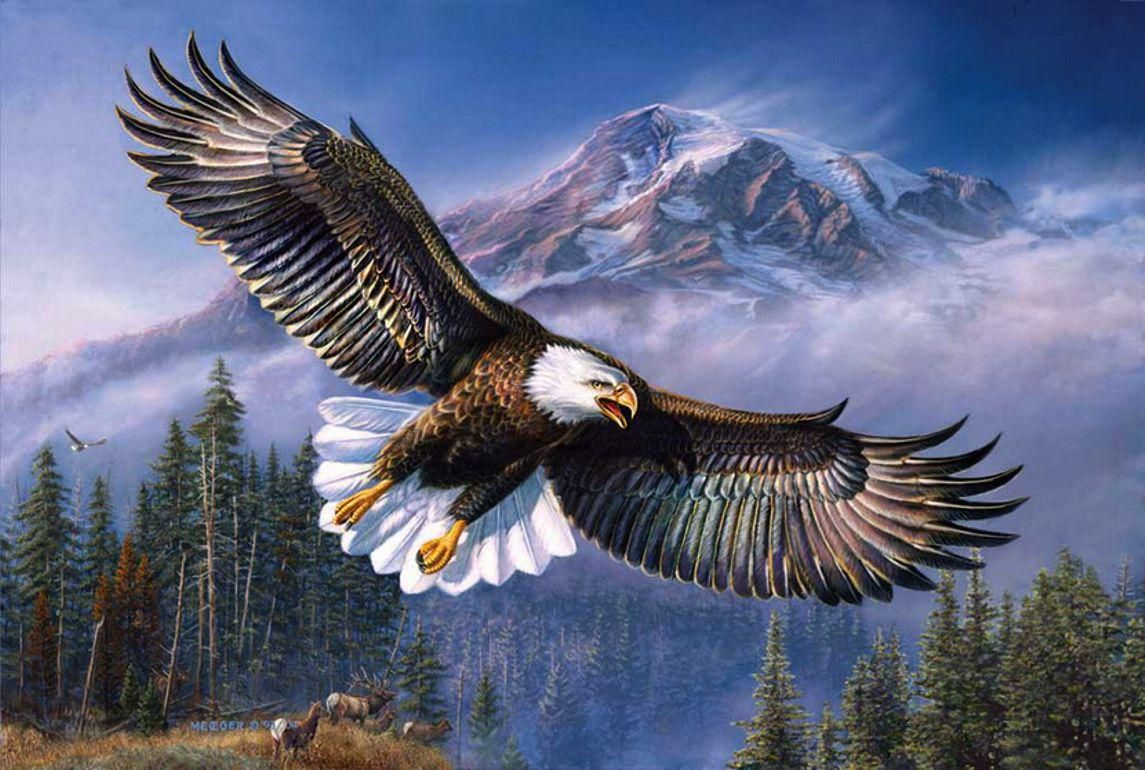 captivating-eagle-flying-hd-wallpapers-eagle-wallpaper-hd ...