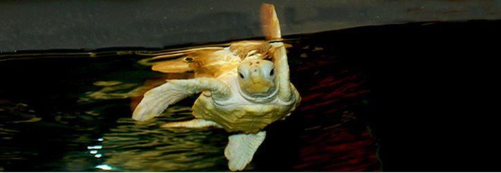 Pine Knoll Shores Aquarium   Emerald Isle, NC   Pine knoll