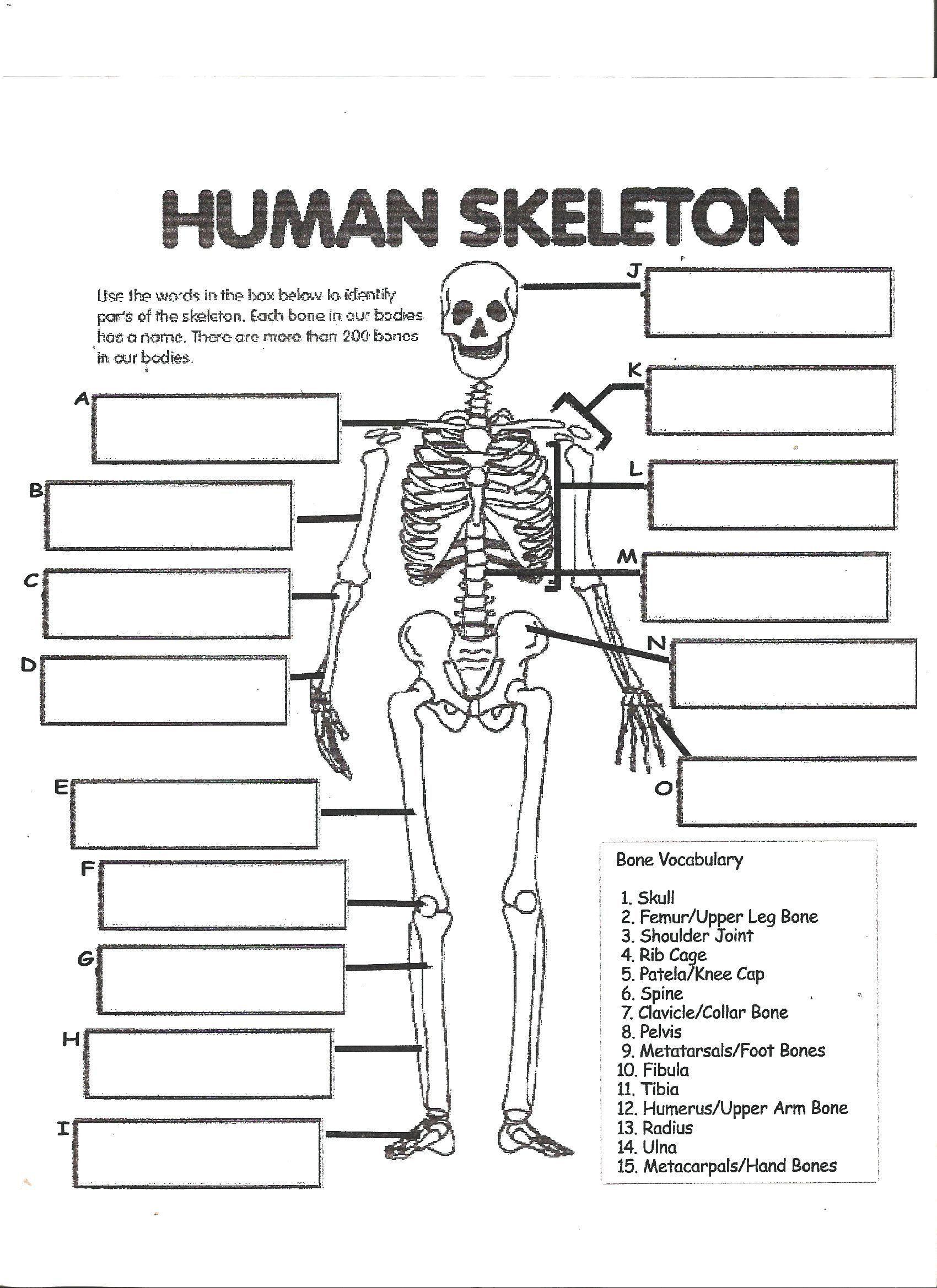 Simple Skeleton Worksheet For Kindergarten