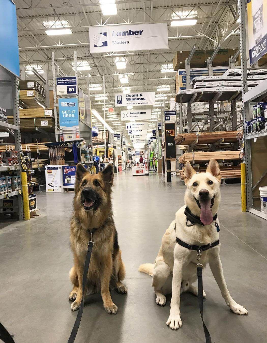 Most Dog Friendly Stores in America - Lowes | Dog stuff