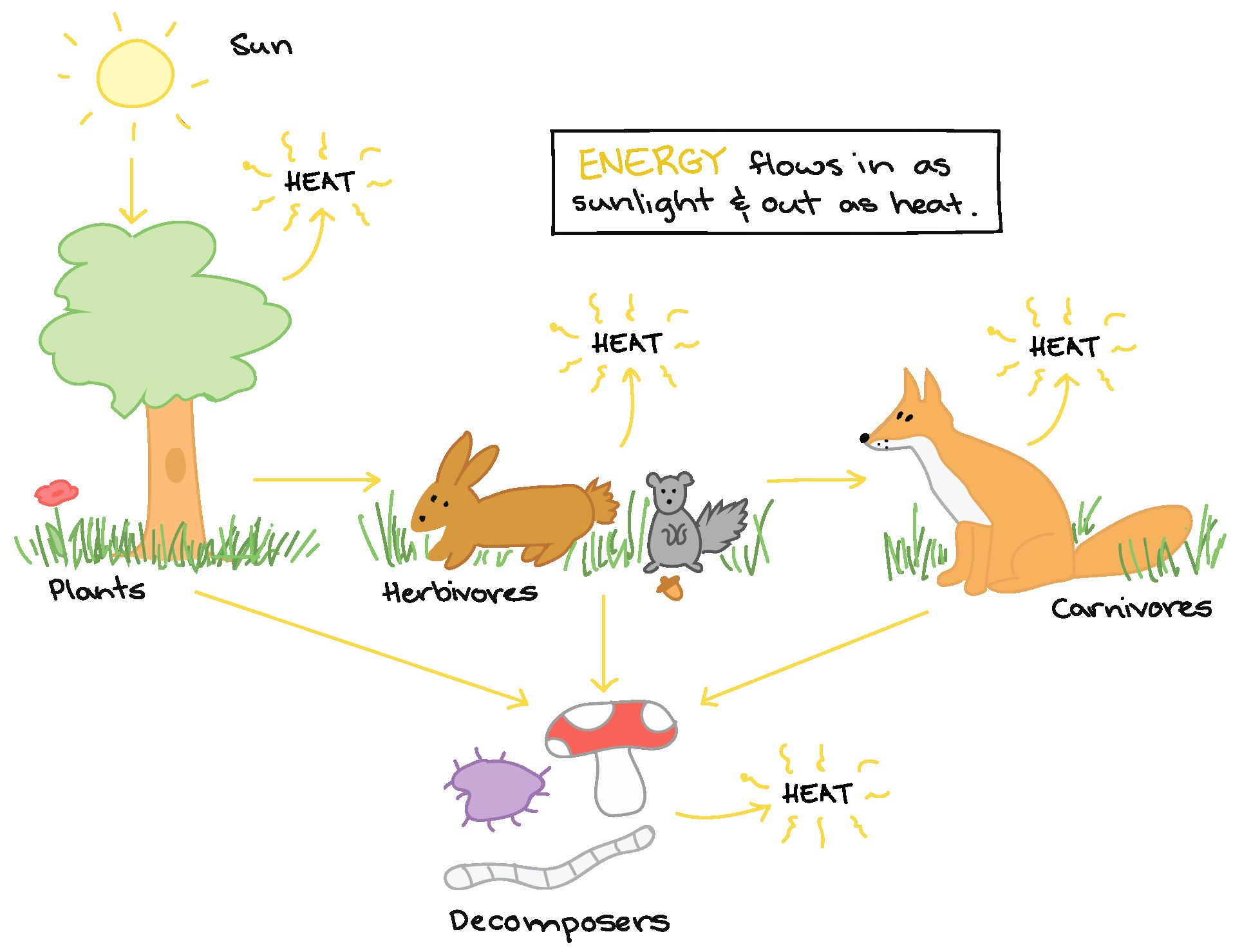 Energy Flow In Ecosystems Worksheet Beautiful Energy Flow In An Ecosystem Worksheet Answers Biozone In 2020 Ecosystems High School Earth Science Energy Flow