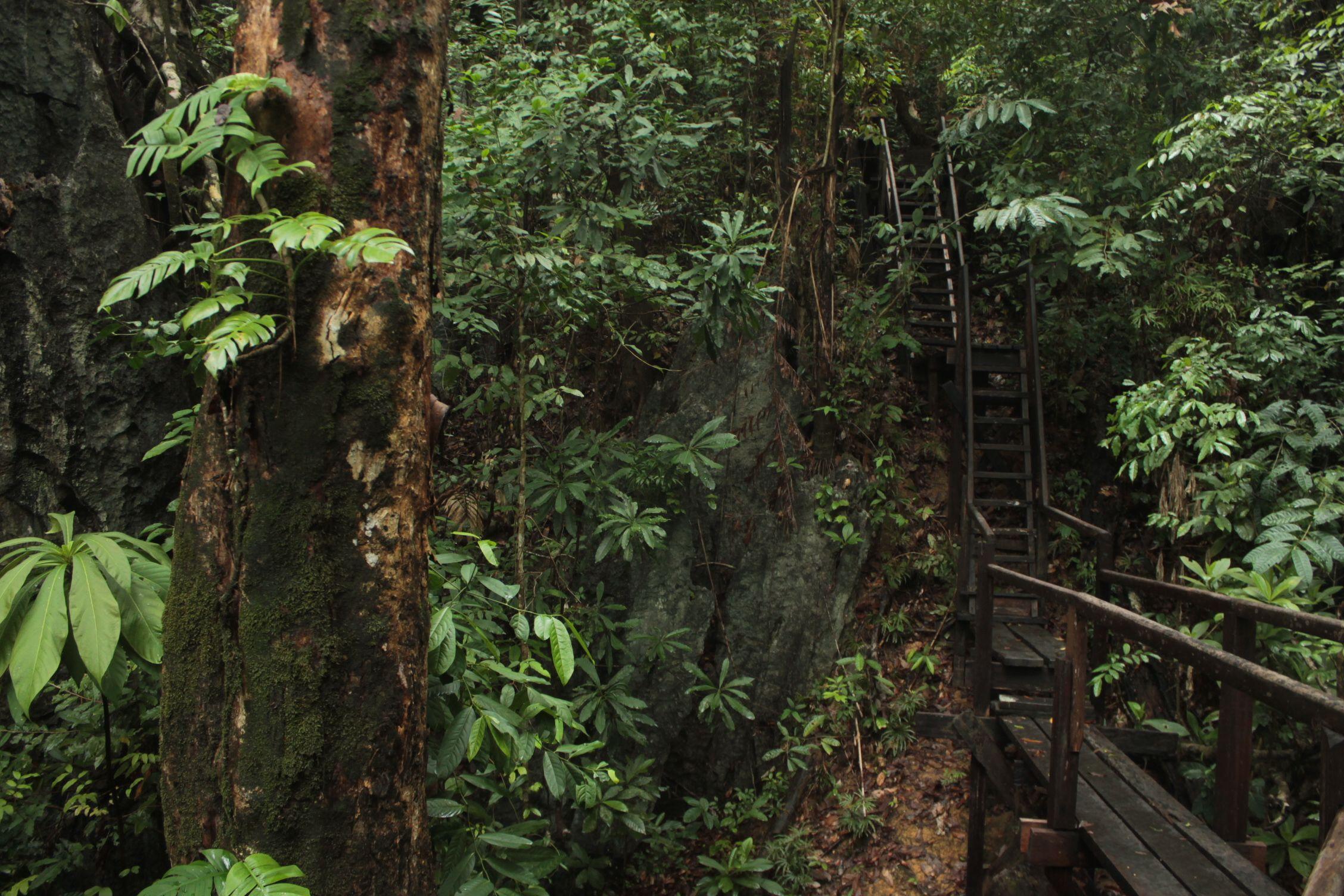 Parte del camino de la jungla en el rio Subterráneo