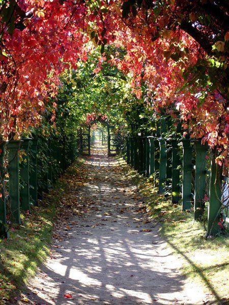Allée de jardin surplombée d\'arches aux couleurs automnales ...