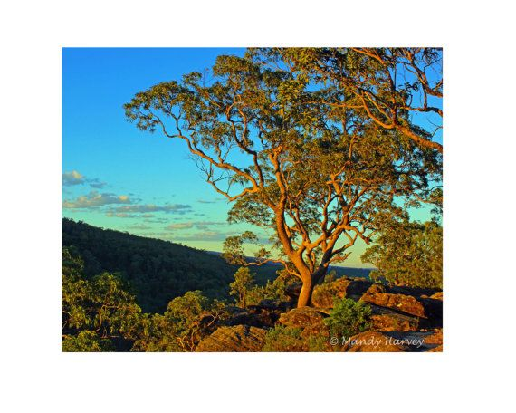 Reflecting Sunset On A Tree At Avoca Lookout Cabbage by BeadsMe