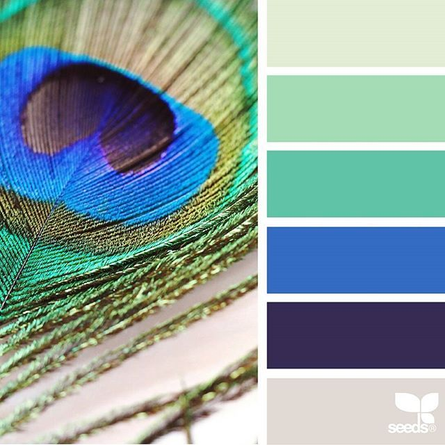 today's inspiration image for { feather hues } is by @rotblaugelb ... thank you, Julia, for another inspiring #SeedsColor image share!