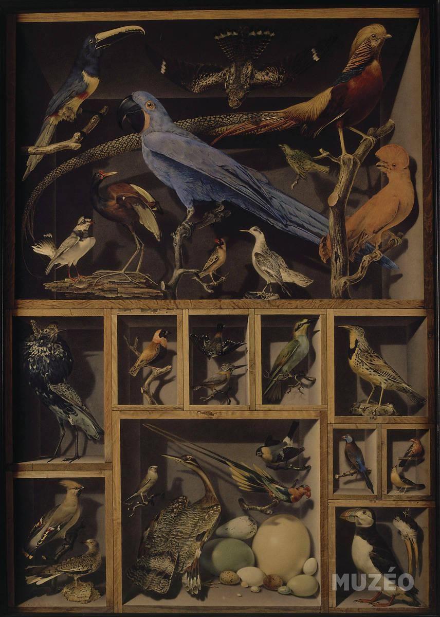 alexandre isidore leroy de barde nature morte aux oiseaux exotiques 1800 gouache et. Black Bedroom Furniture Sets. Home Design Ideas